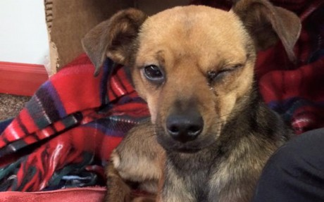 Homeless Dog Gets Rescued Then Something Incredible Happened, Making All Her Holiday Wishes Come True