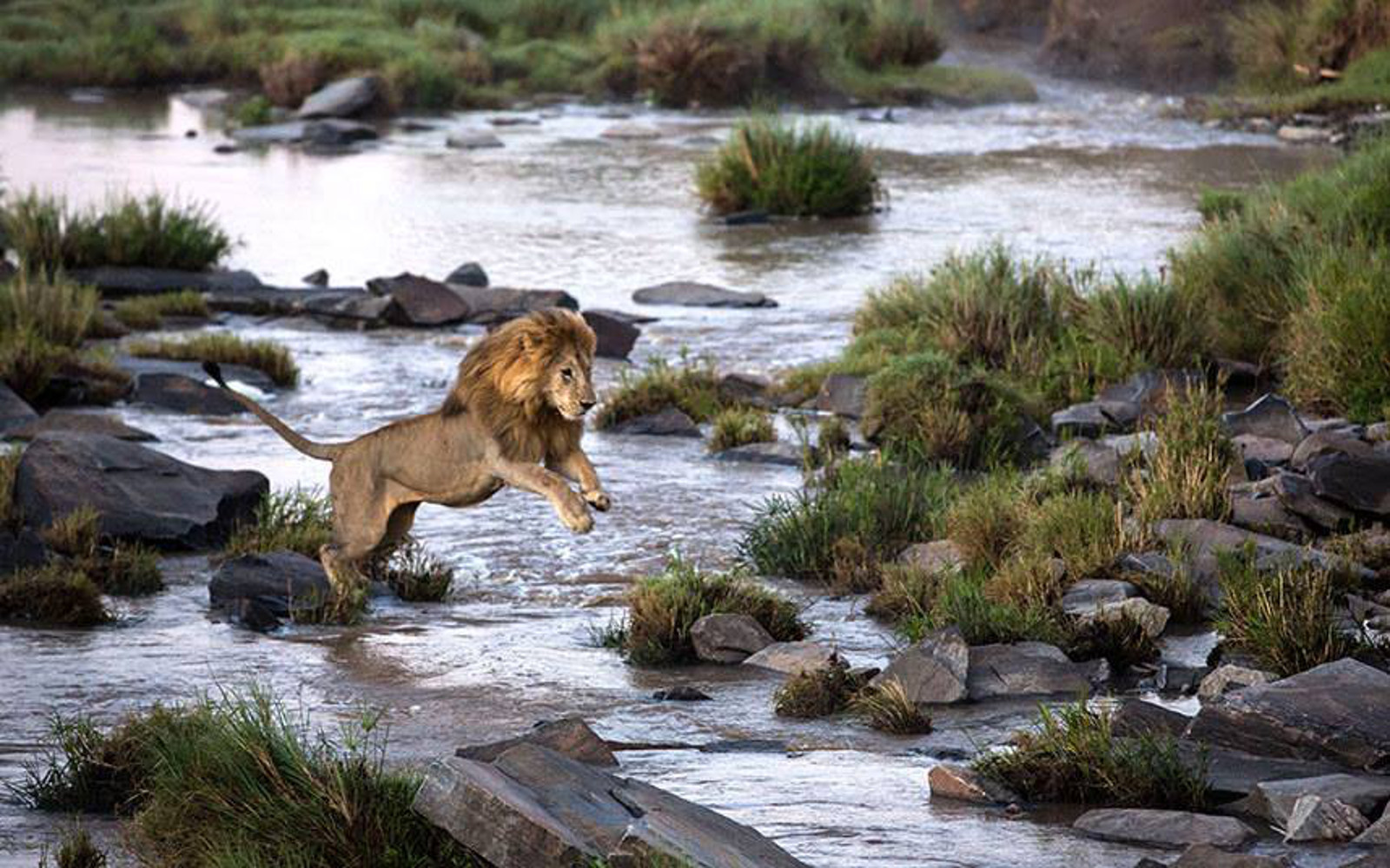This Stunning Photo Shows Us How All Lions Should Live