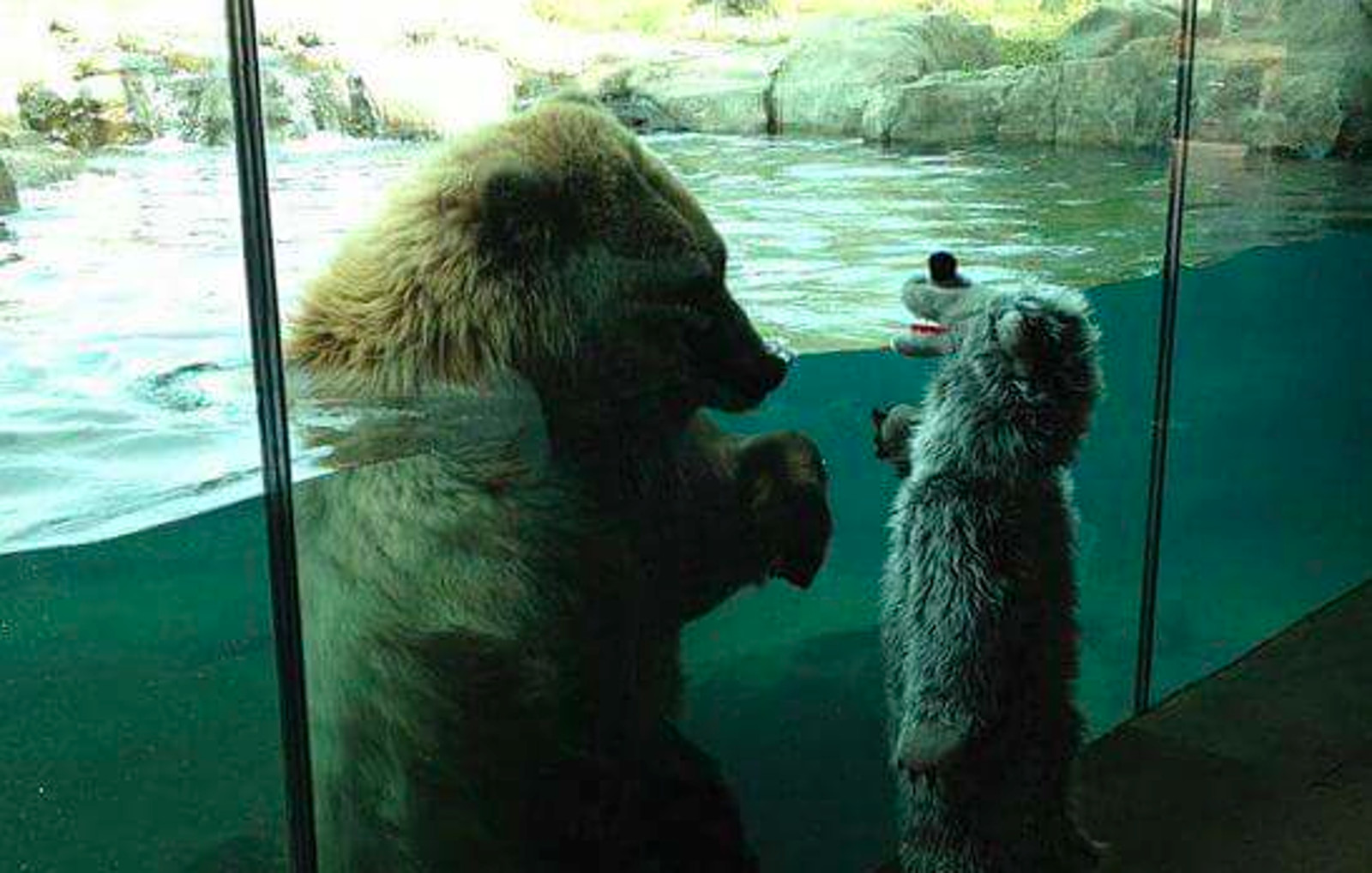 Sad Photo of a Child Meeting a Captive Bear Shows us That This is NOT How Kids Should Experience Animals