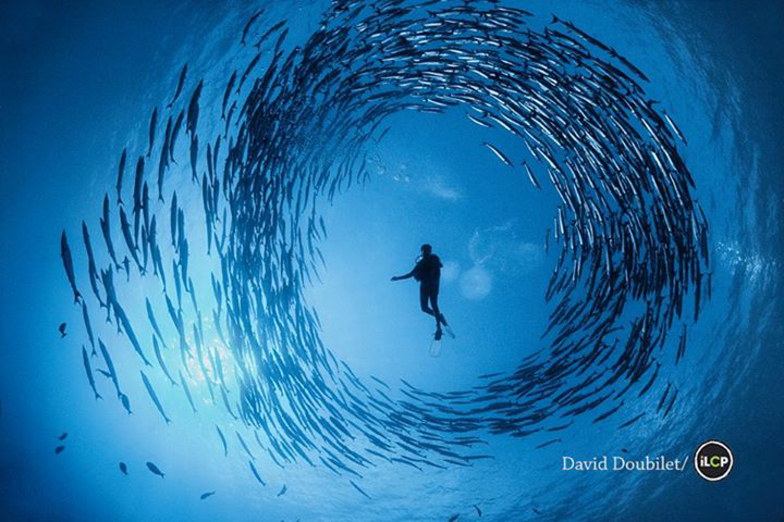 Stunning Image Foreshadows the Role We Play in the Future of the World's Oceans