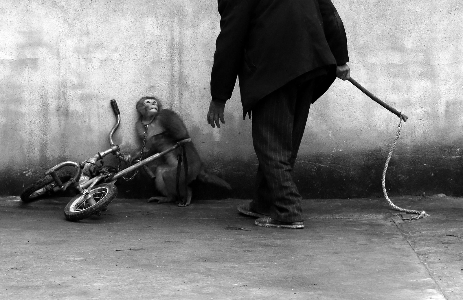 This One Shocking Photo Exposes the Reality of What Training Animals for the Circus Looks Like