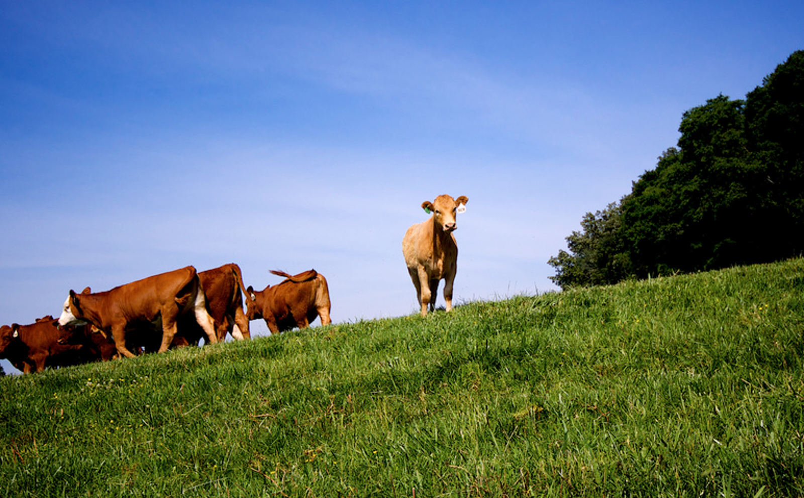 What the What! Grass-Fed Meat is Worse for the Planet Than Flying From NYC to London