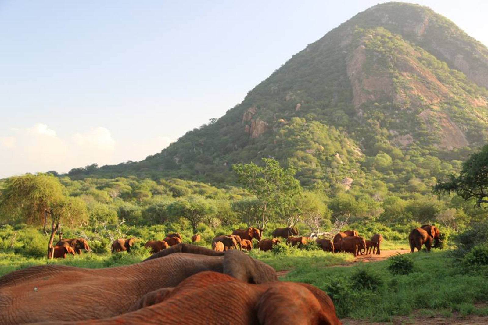 Orphaned Elephants Look Into Their Hopeful Futures