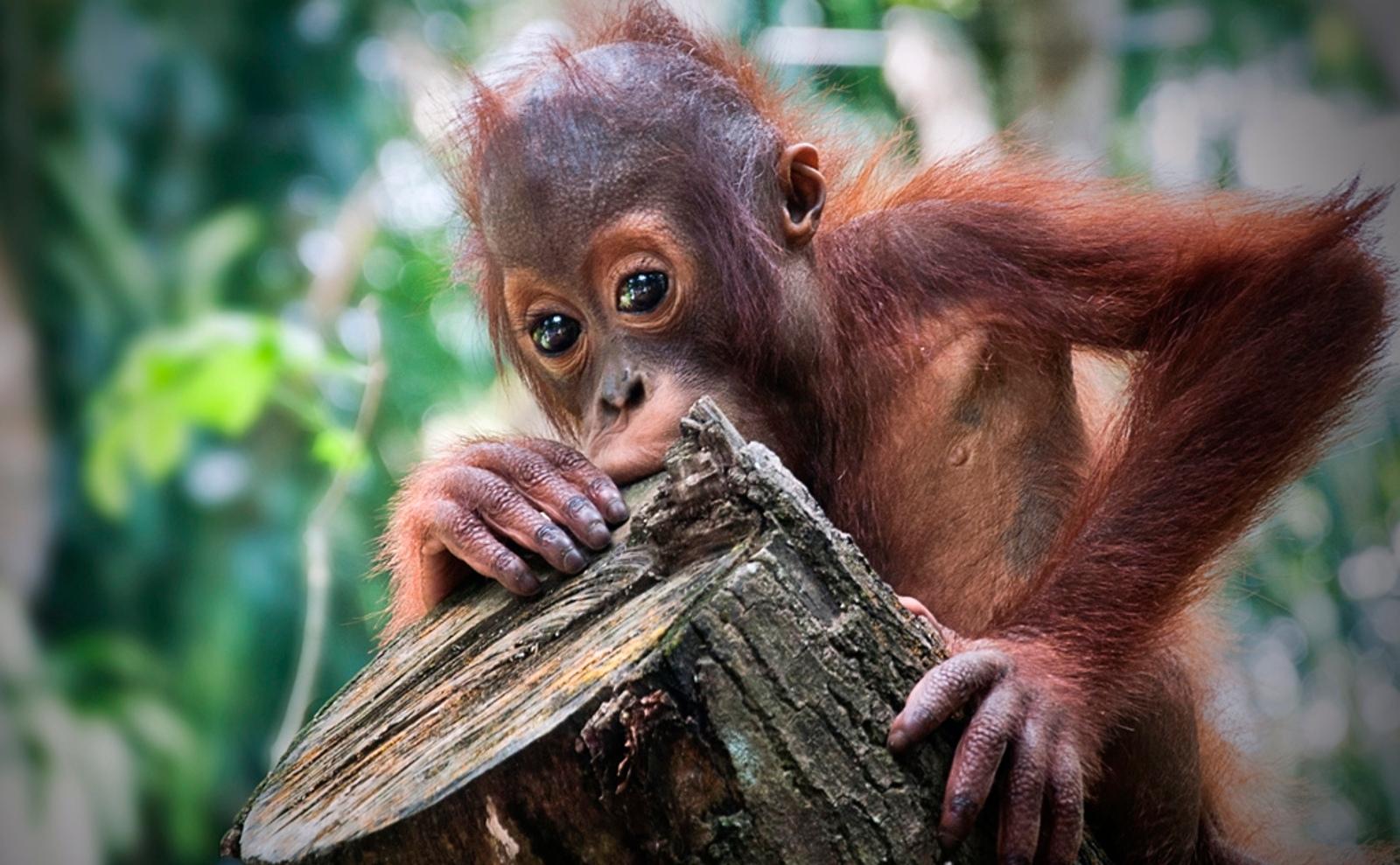 Big Palm Oil