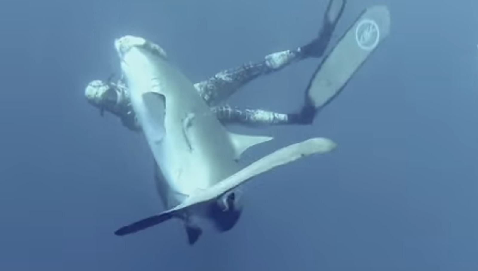 Brave Diver Removes Hook From Injured Shark's Mouth (VIDEO)