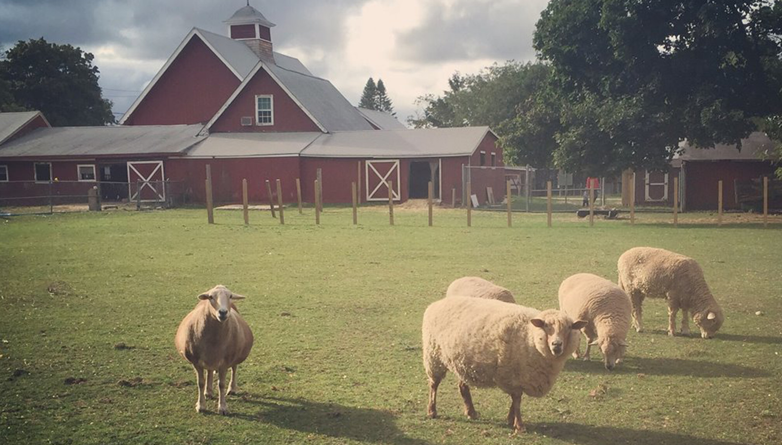 Former Dairy Farm Becomes Animal Sanctuary and Home to Vegan Ice Cream Shop
