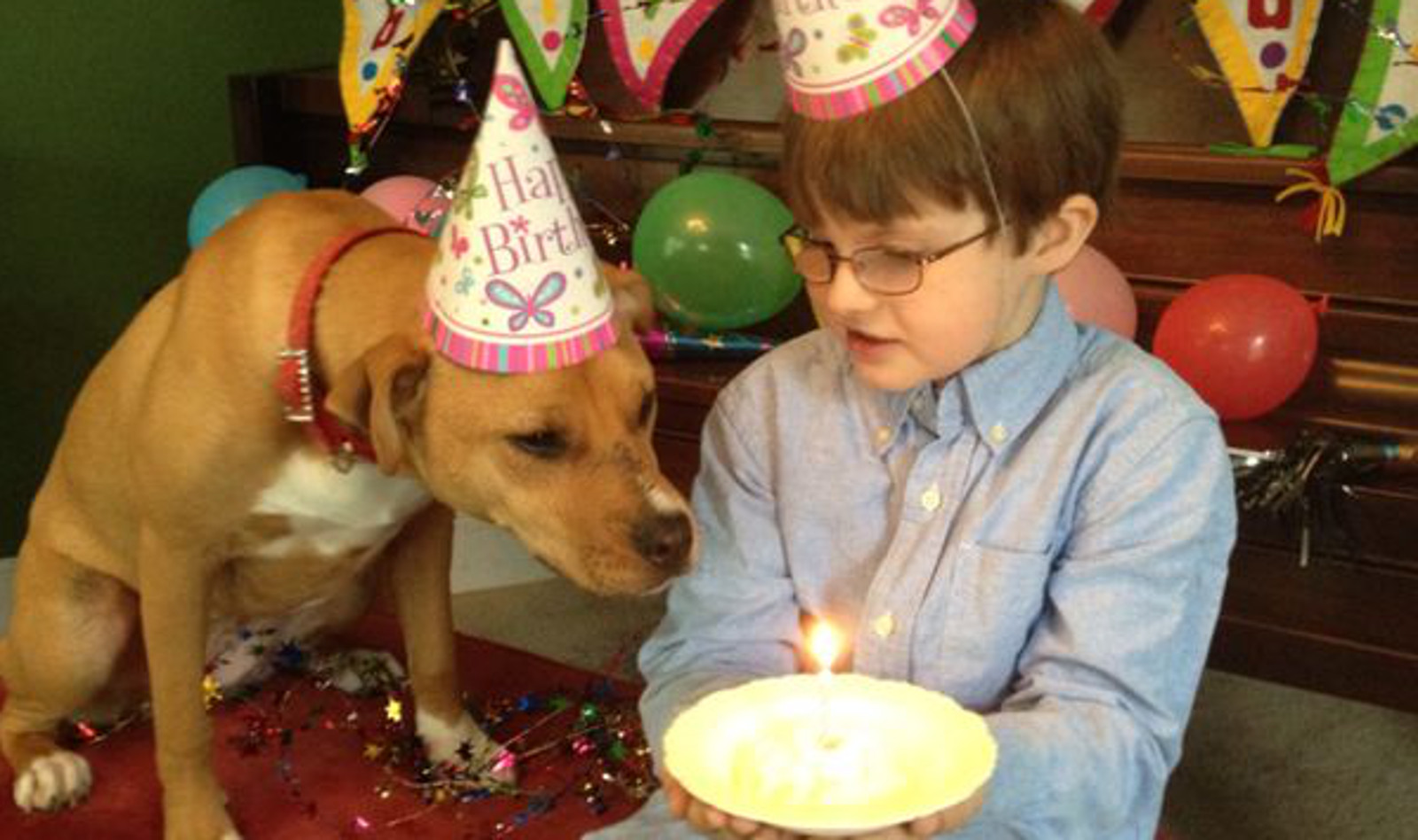Shelter Dogs Making a Difference in the Lives of Children with Autism