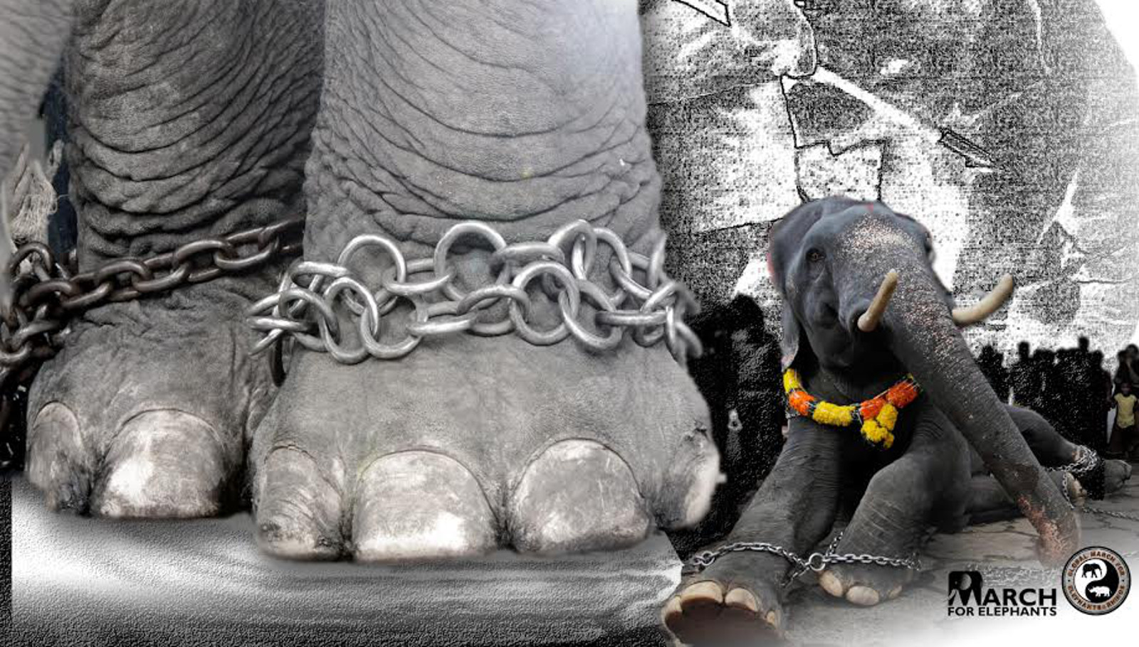 Seven Simple Things You Can Do to Help Captive Elephants
