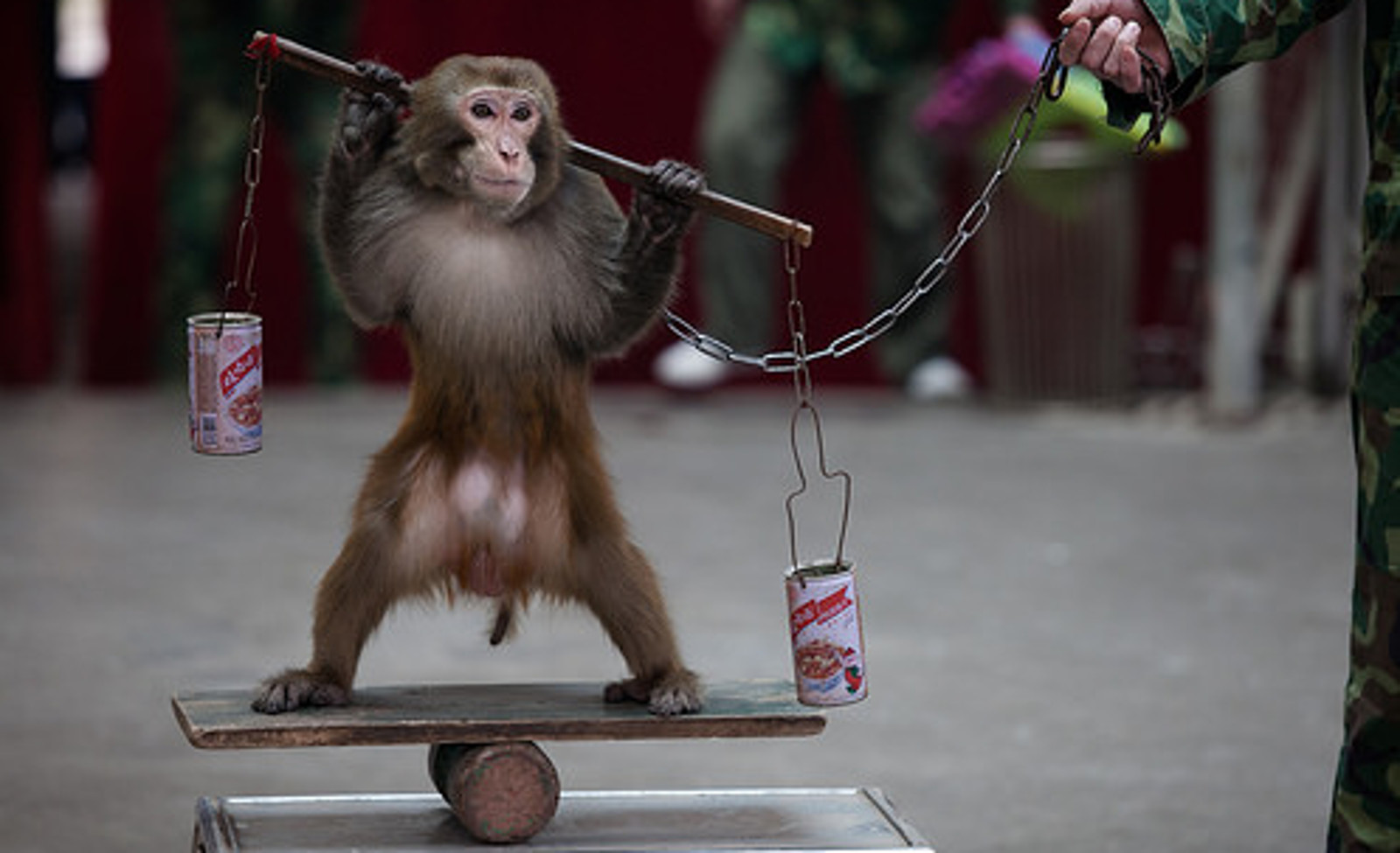 """Let's Reclaim The """"Year of The Monkey"""" For The Monkeys"""