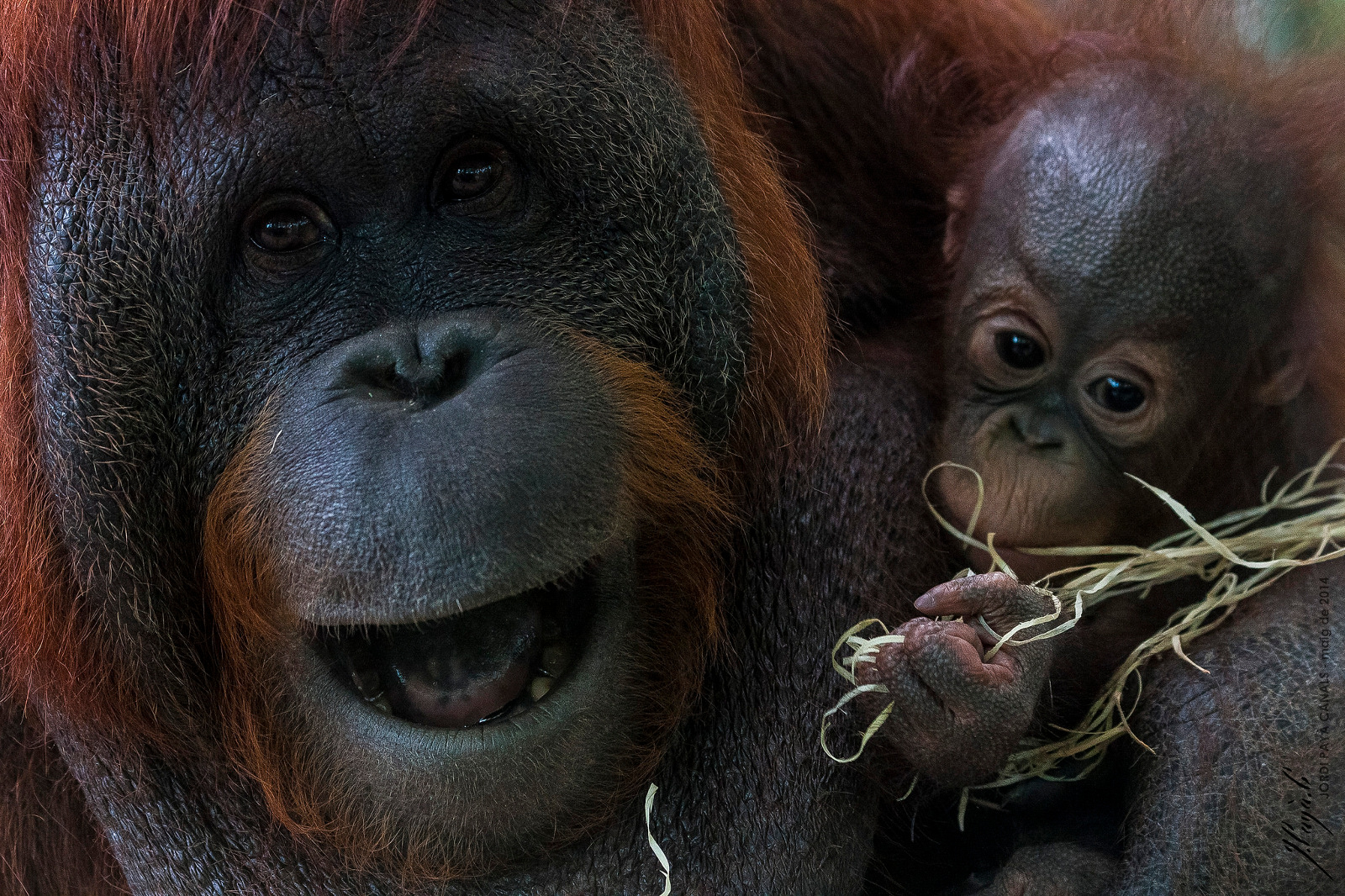 Over 168,000 Acres of Rainforest Converted to Sanctuary to Protect Orangutans and Other Animals