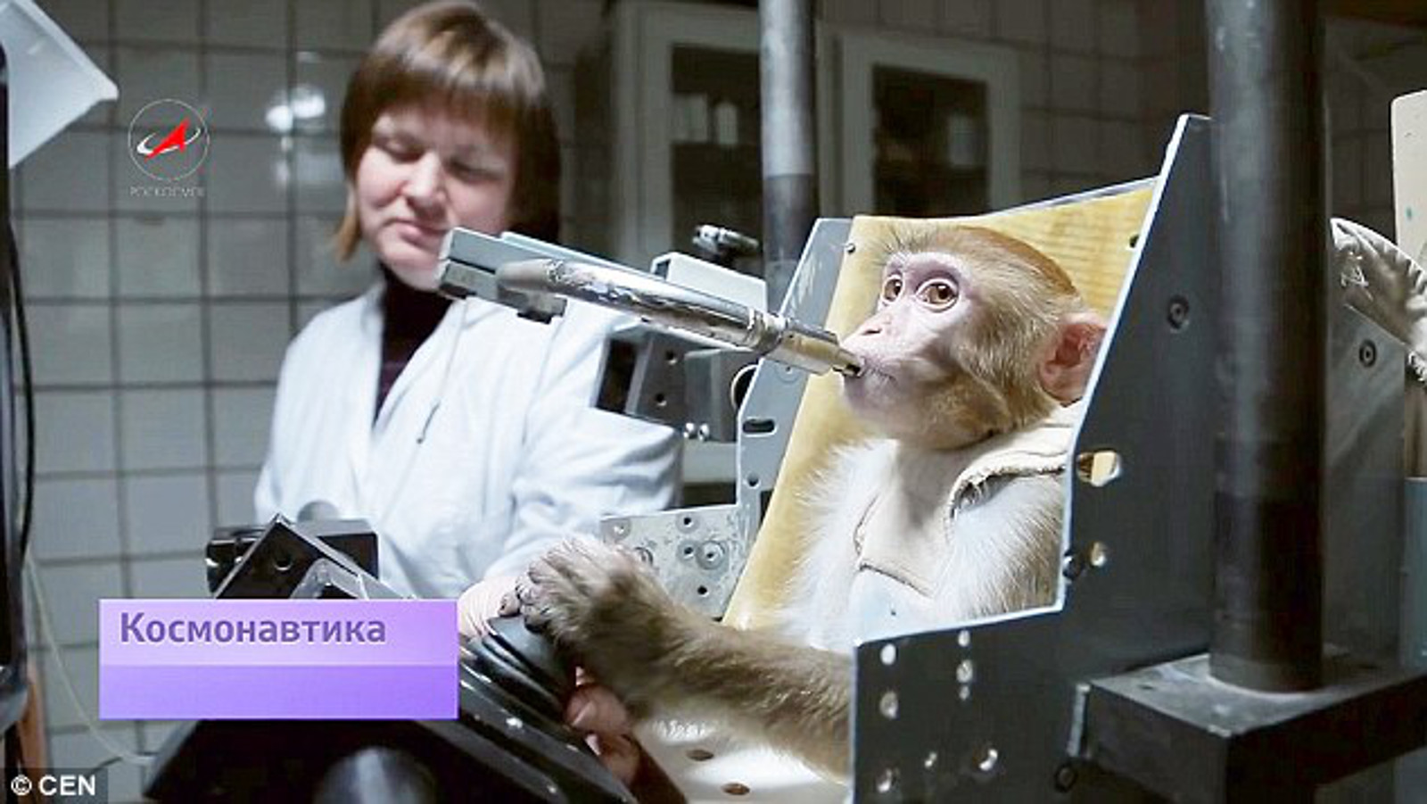 WTH?!? Russia is Sending Four Monkeys to Mars Next Year – You Can Help Them