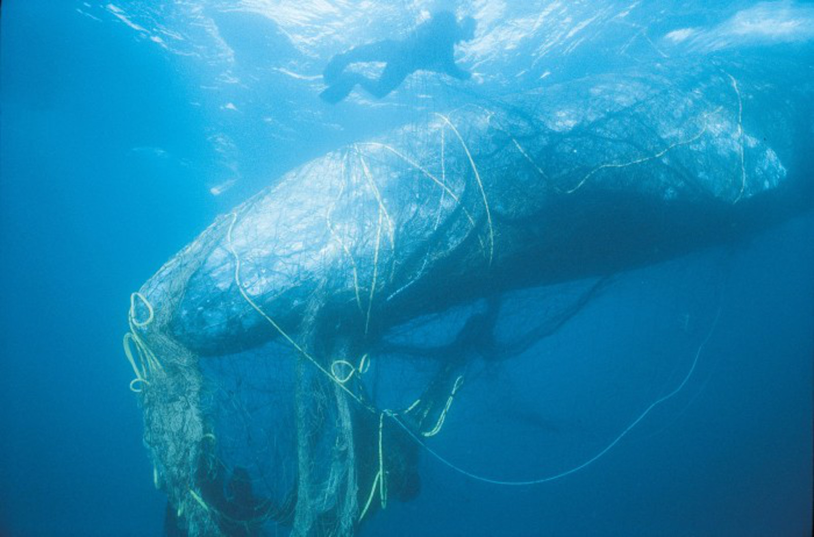 These Nets Designed to Capture Small Fish are Killing the Oceans – Here's How You Can Help Stop This Today!