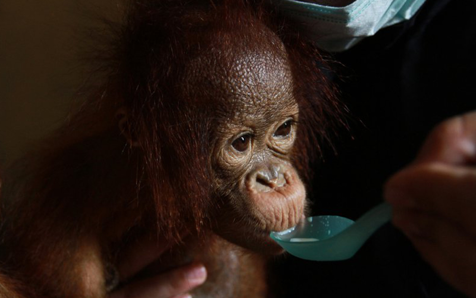 Snack and Personal Care Companies Commit to End Palm Oil Deforestation – Who is Actually Taking Action?