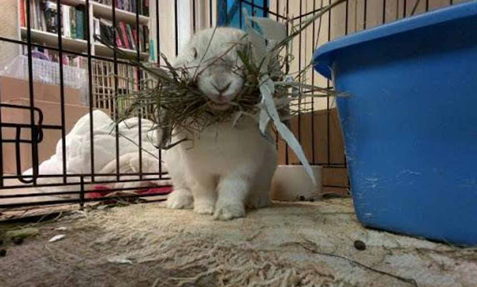 Baby Rabbit Rescued After Being Terrorized for Weeks by Pen Mate in a Filthy Cage