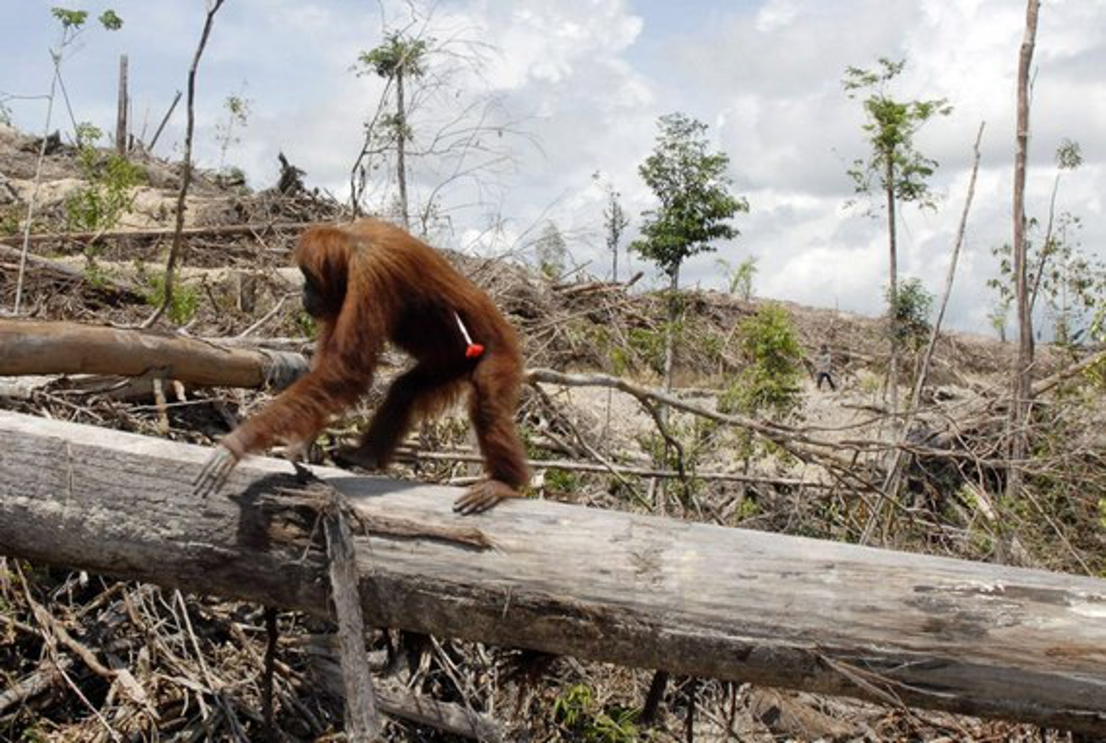 This Heartbreaking Image Reveals What Deforestation Really Looks Like
