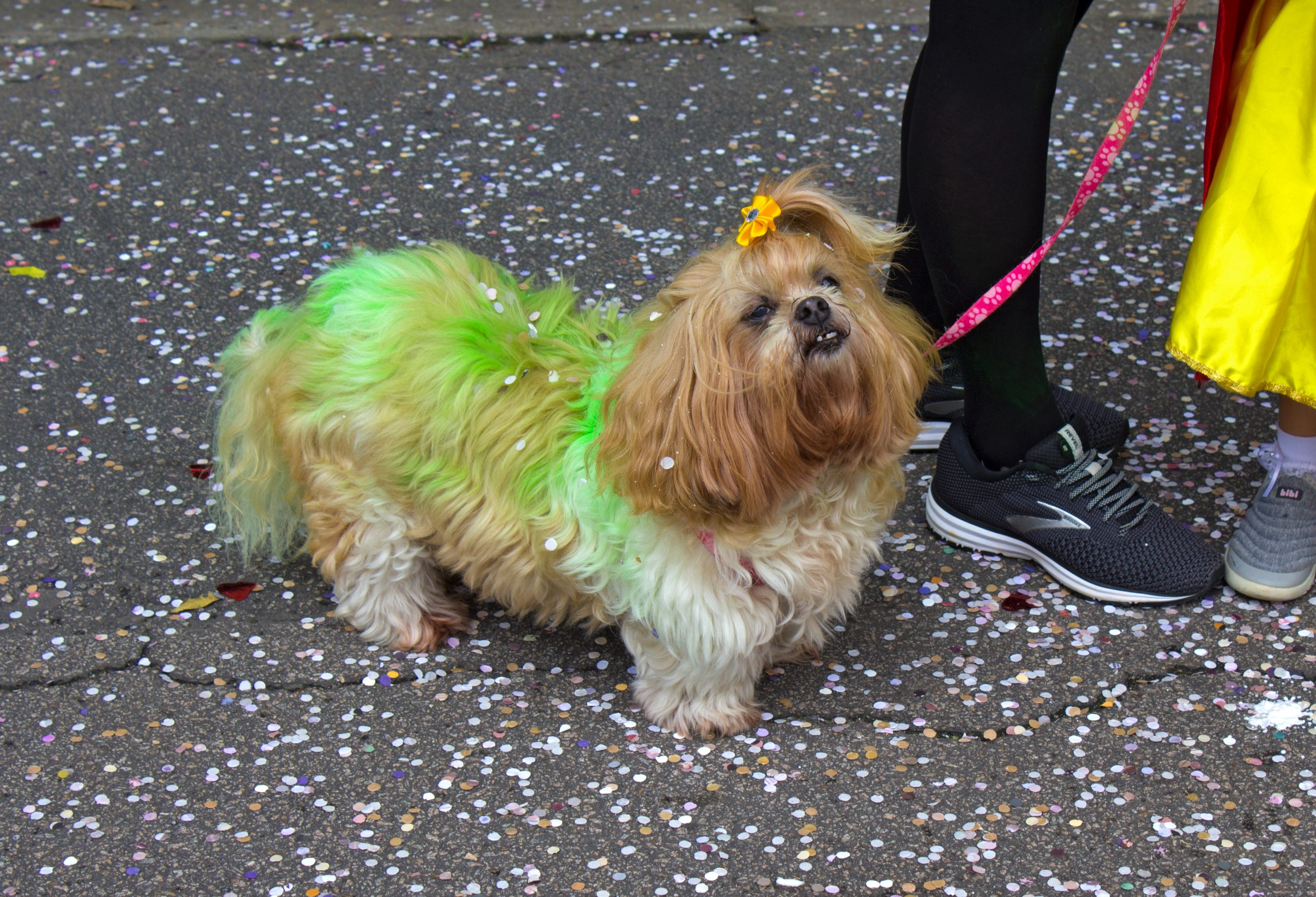 green dyed dog