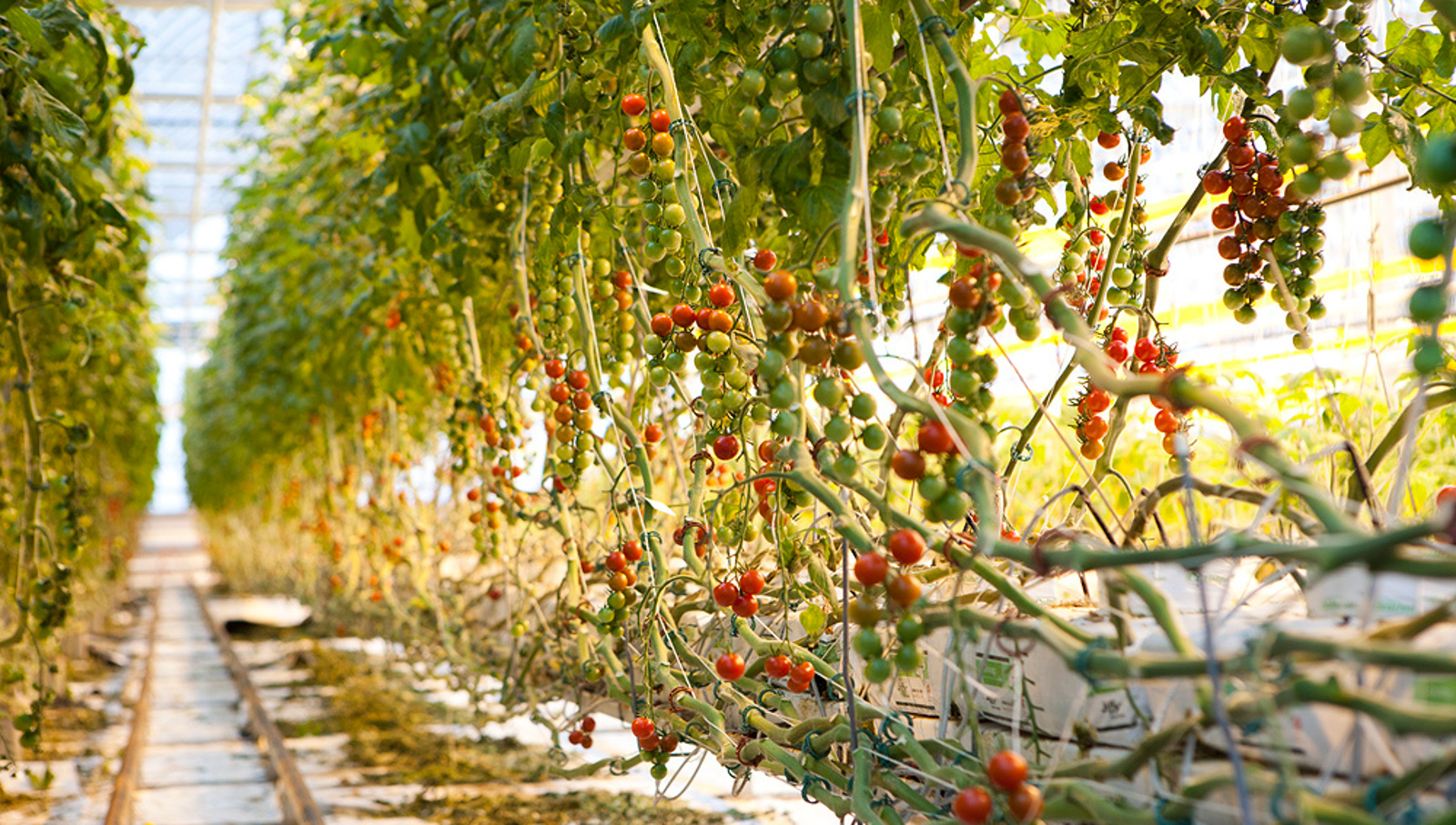 5 Places (That Ain't in the Ground) to Grow Vegetables