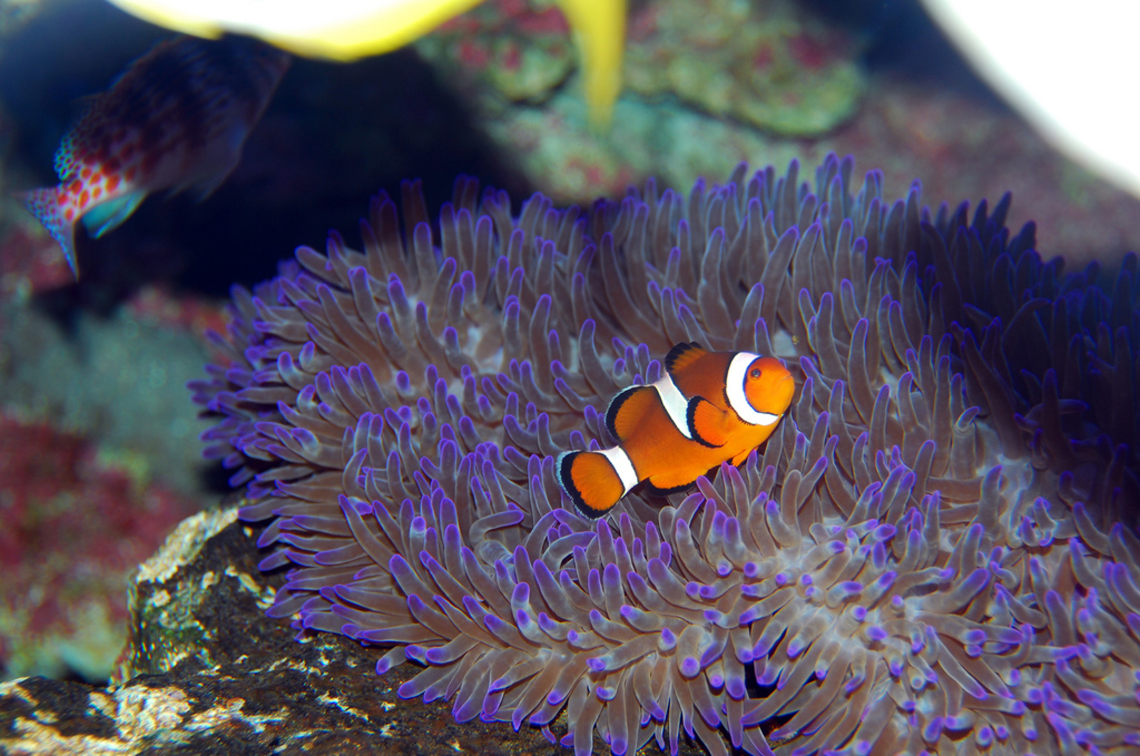 The Secret Behind the Pet Tropical Fish Industry