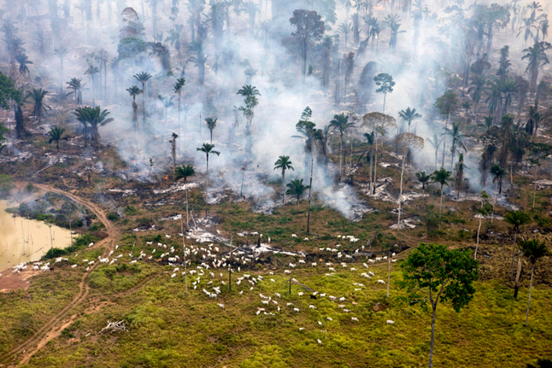 Disappearing Forests: The True Price of Expanding Animal Agriculture