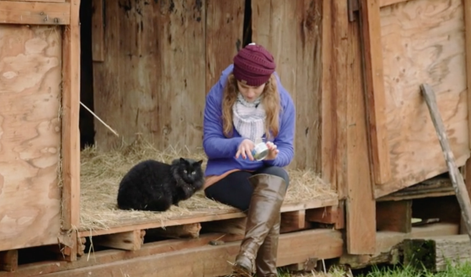 3 Awesome Programs That are Helping Feral Cats by Giving Them Jobs
