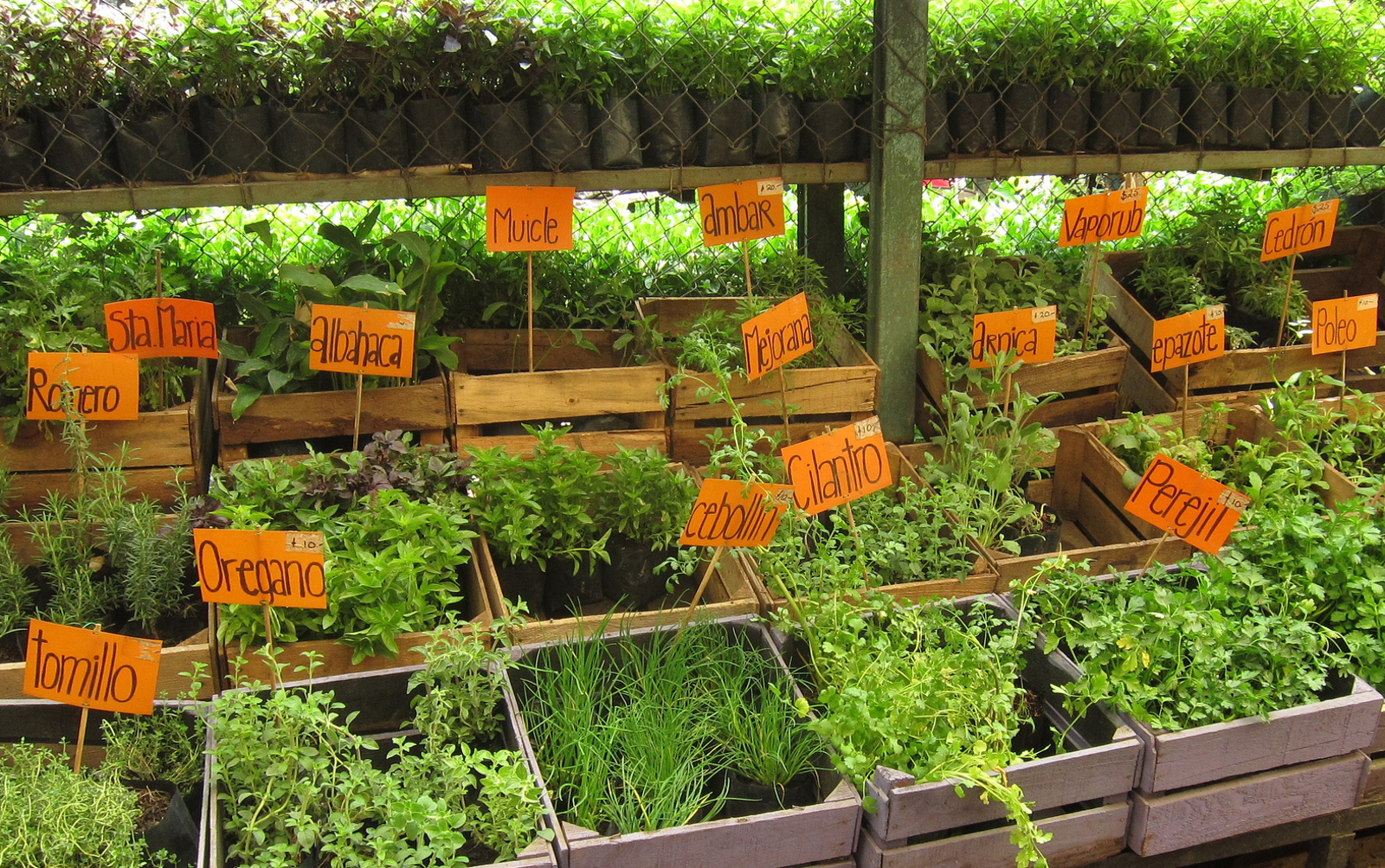 9 Herbs and Spices to Start a Medicinal Garden at Home