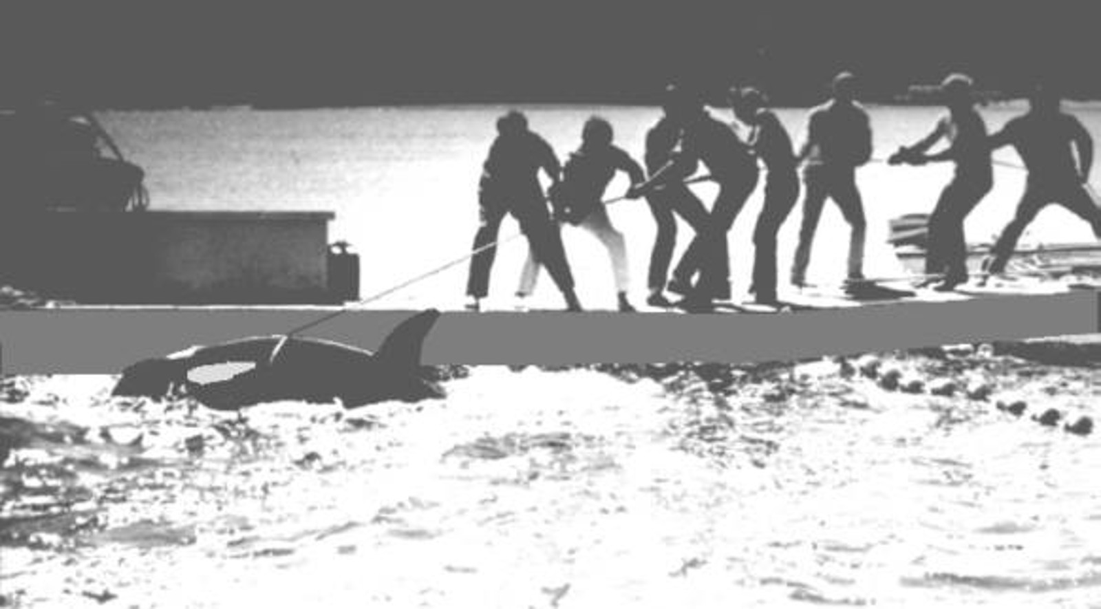 ‪#‎EmptyTheTanks! This Shocking Photo Records the Moment Long-Suffering Orca Lolita Was Captured