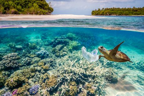 700 Marine Species Might Go Extinct Because of Plastic Pollution. Here Are 5 Ways You Can Help!