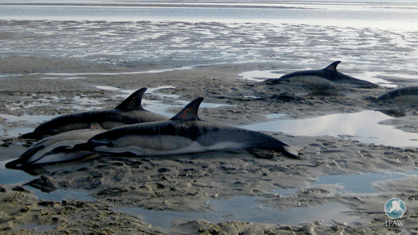 Are You Helping or Harming? What to do if You Encounter a Stranded Dolphin