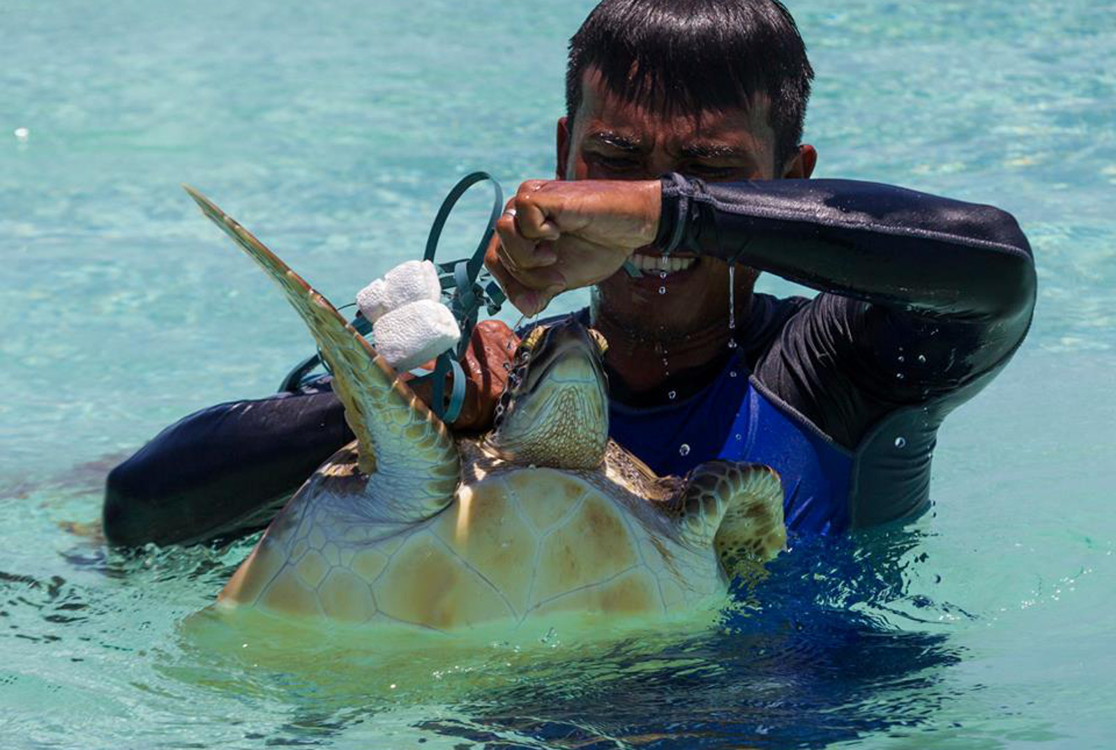 Turtle Trapped in Plastic Will Make You Think Twice Before Choosing Single-Use
