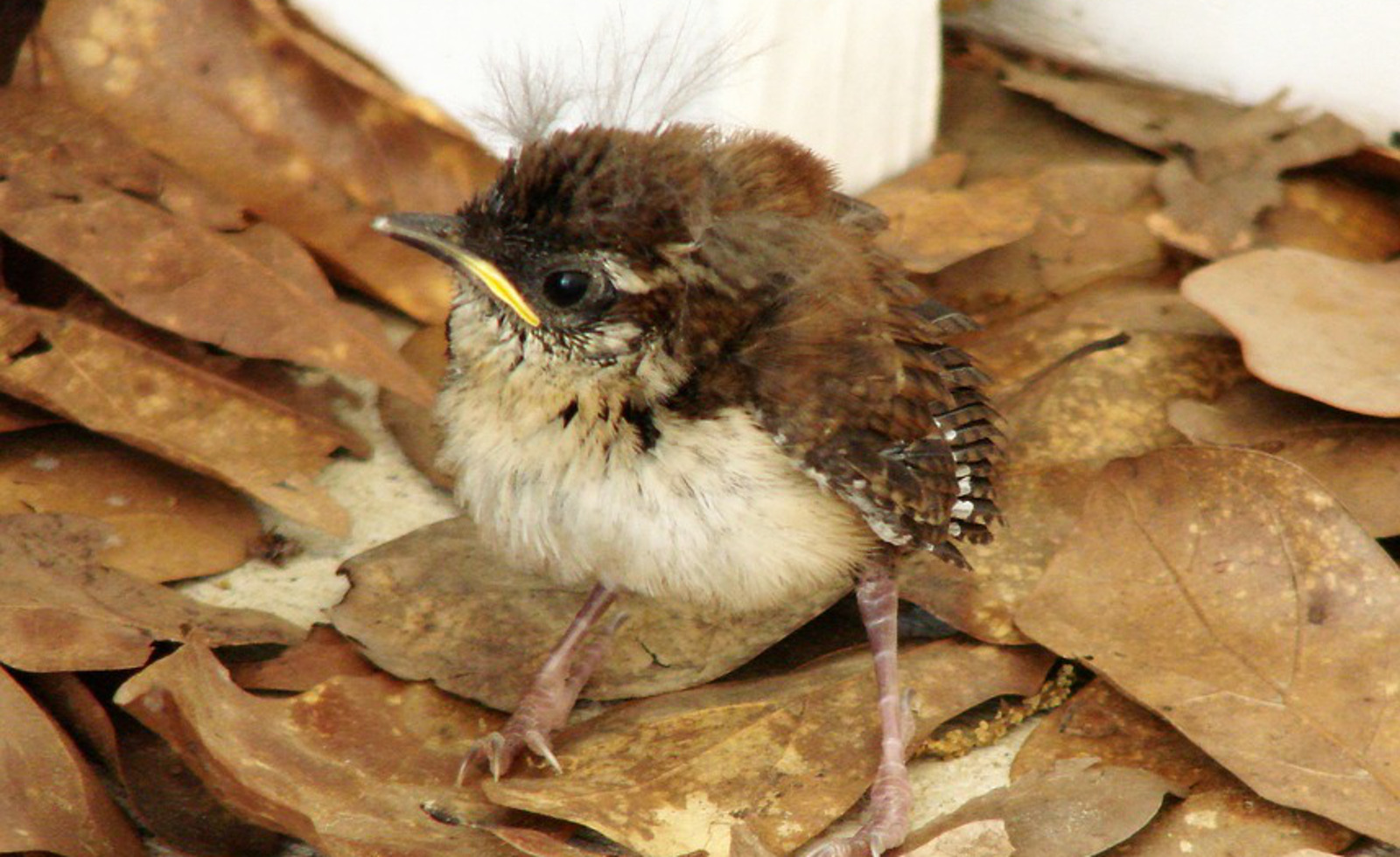 7 Things You Can Do To Help Baby Birds This Summer/Could You Be Killing Baby Birds?