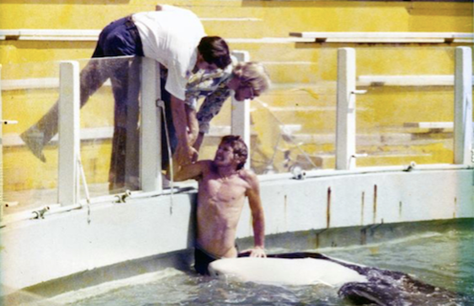 Picture of Hugo the Captive Orca at Miami Seaquarium Shows Us EXACTLY Why These Animals Don't Belong in Captivity