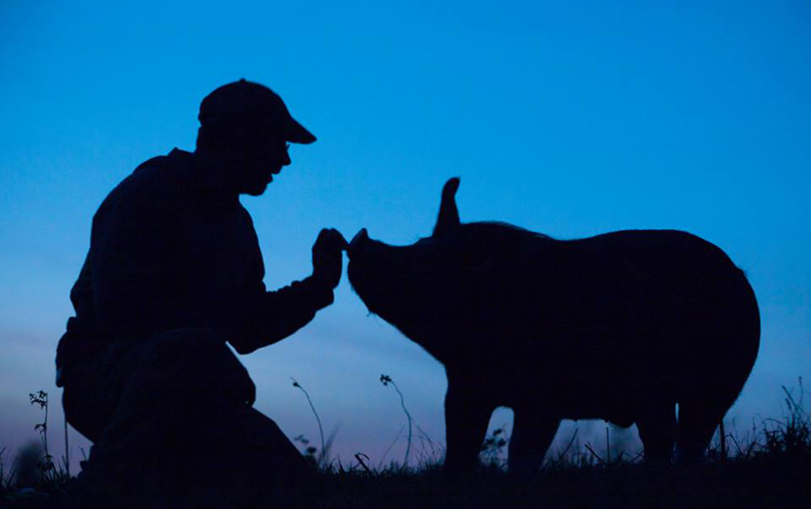 The Incredible Lesson We Can All Learn From Pig Farmer Who Decided to Stop Killing Animals