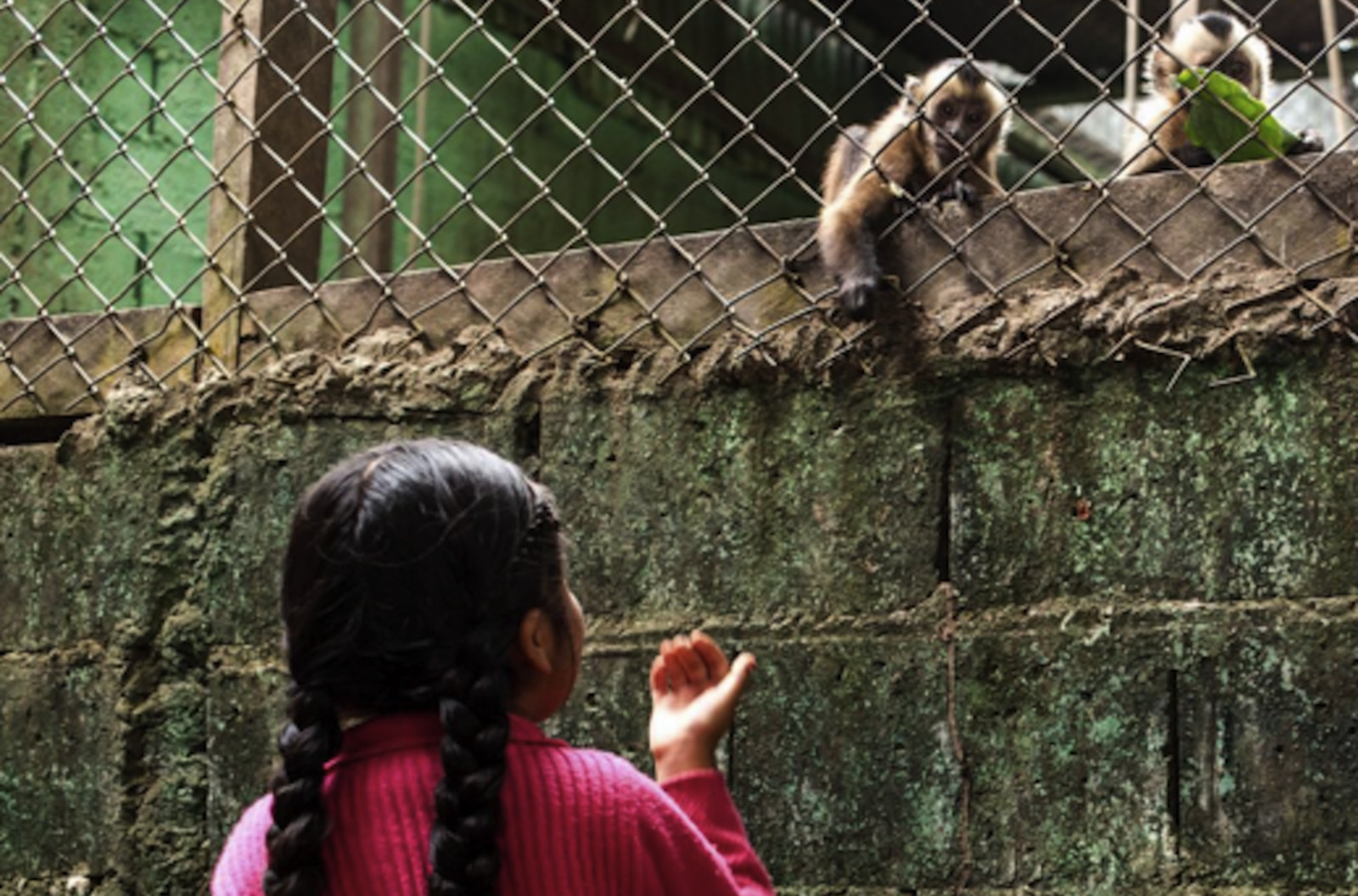 Imprisoned Monkey Reaching Out to Young Girl Shows That Animals Don't Belong in Zoos