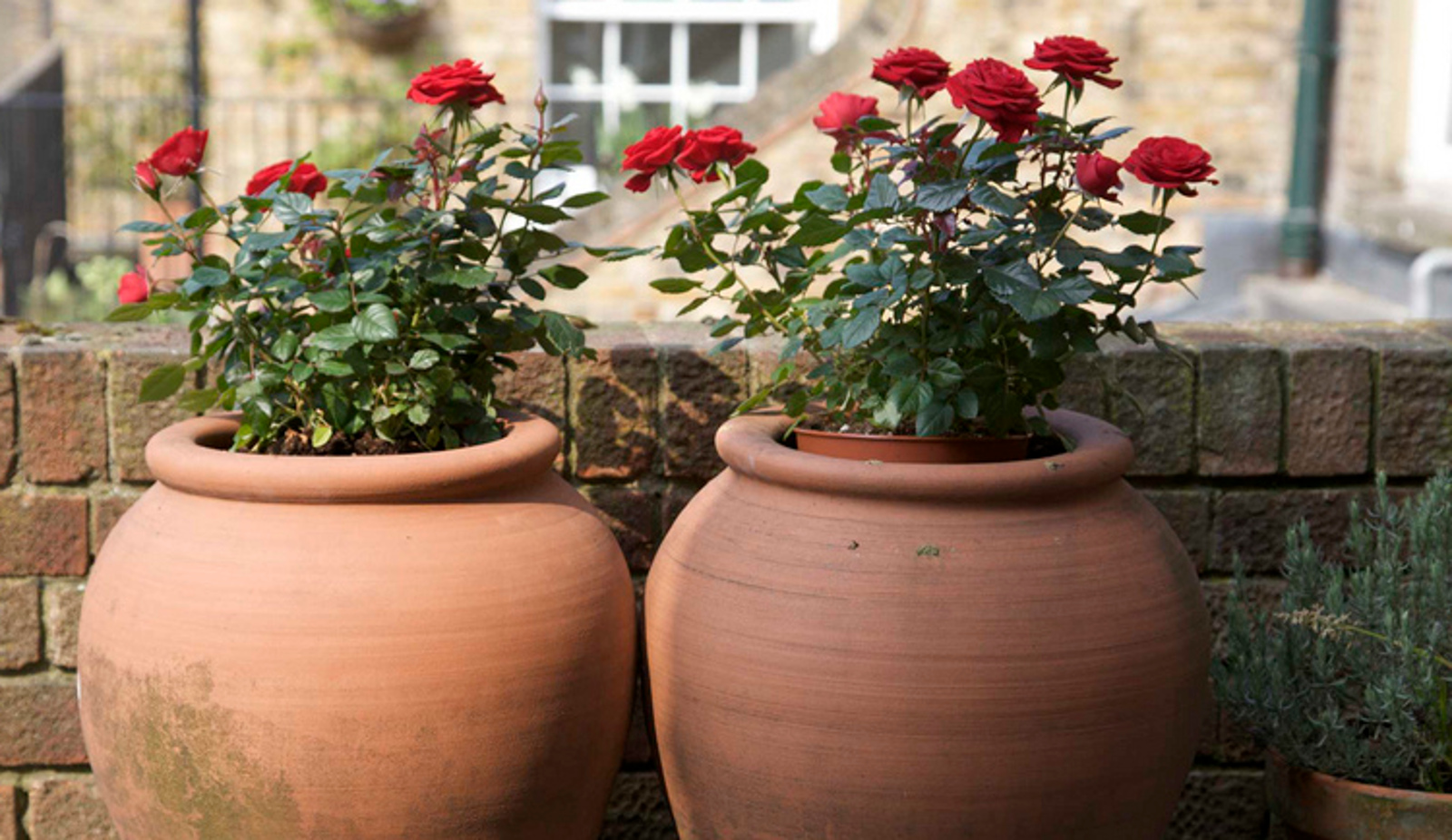 What It Takes to Make a Good Potting Mix at Home