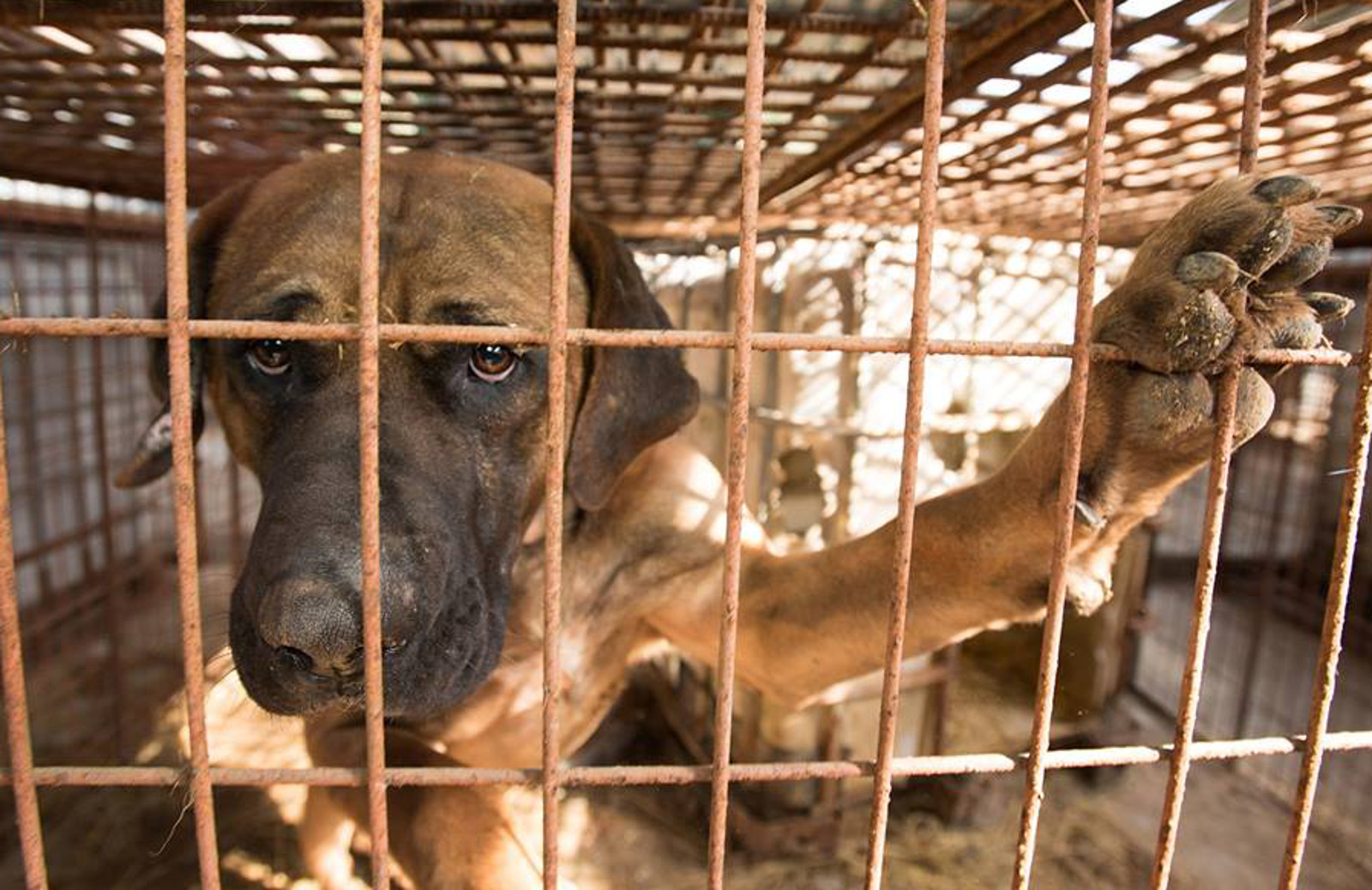 Heartbreaking Photo of Dog in Yulin Meat Market Will Inspire You to See Animals Differently