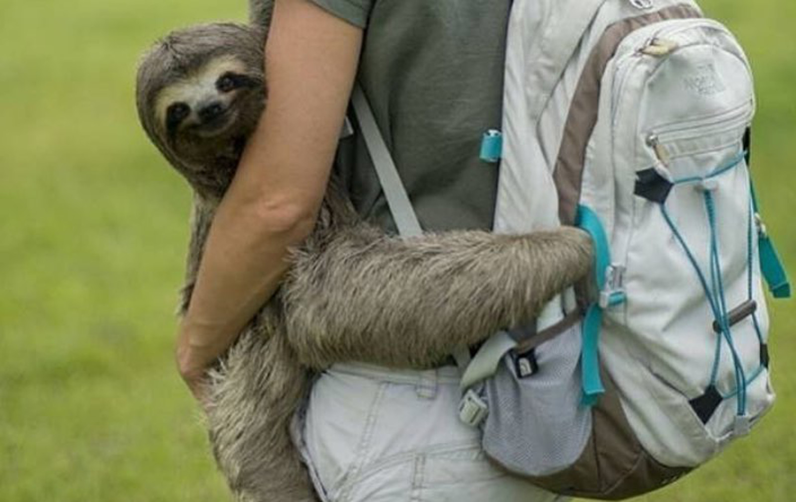 Fantastic Rescue Team Helps Lost Sloth Return to the Wild – in Style!