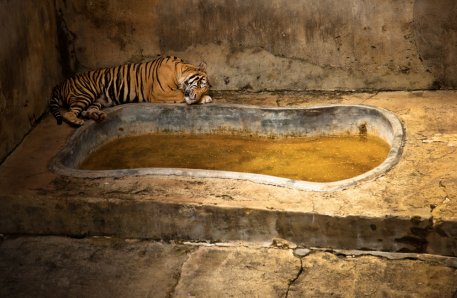 Why Our Views About Zoos Desperately Need to Evolve