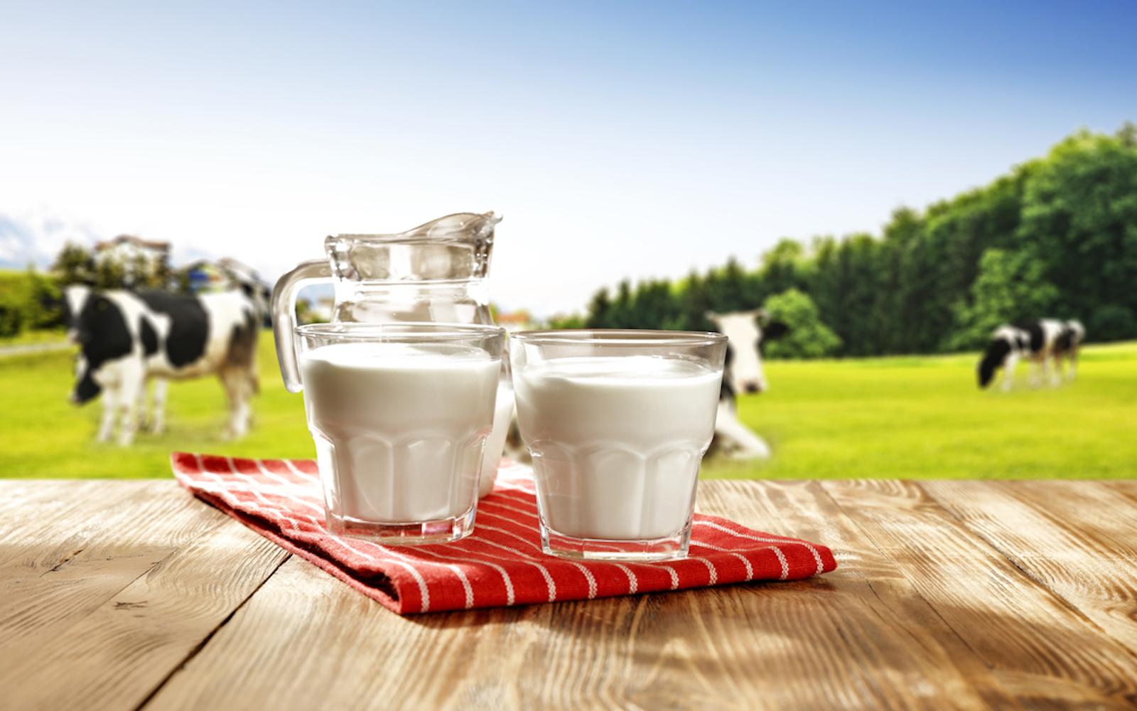 cows milk myths