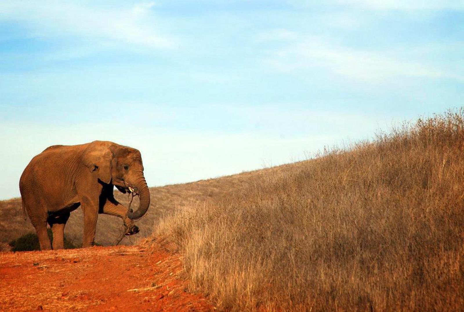 5 Former Zoo Animals That Got Happy Endings at Sanctuaries