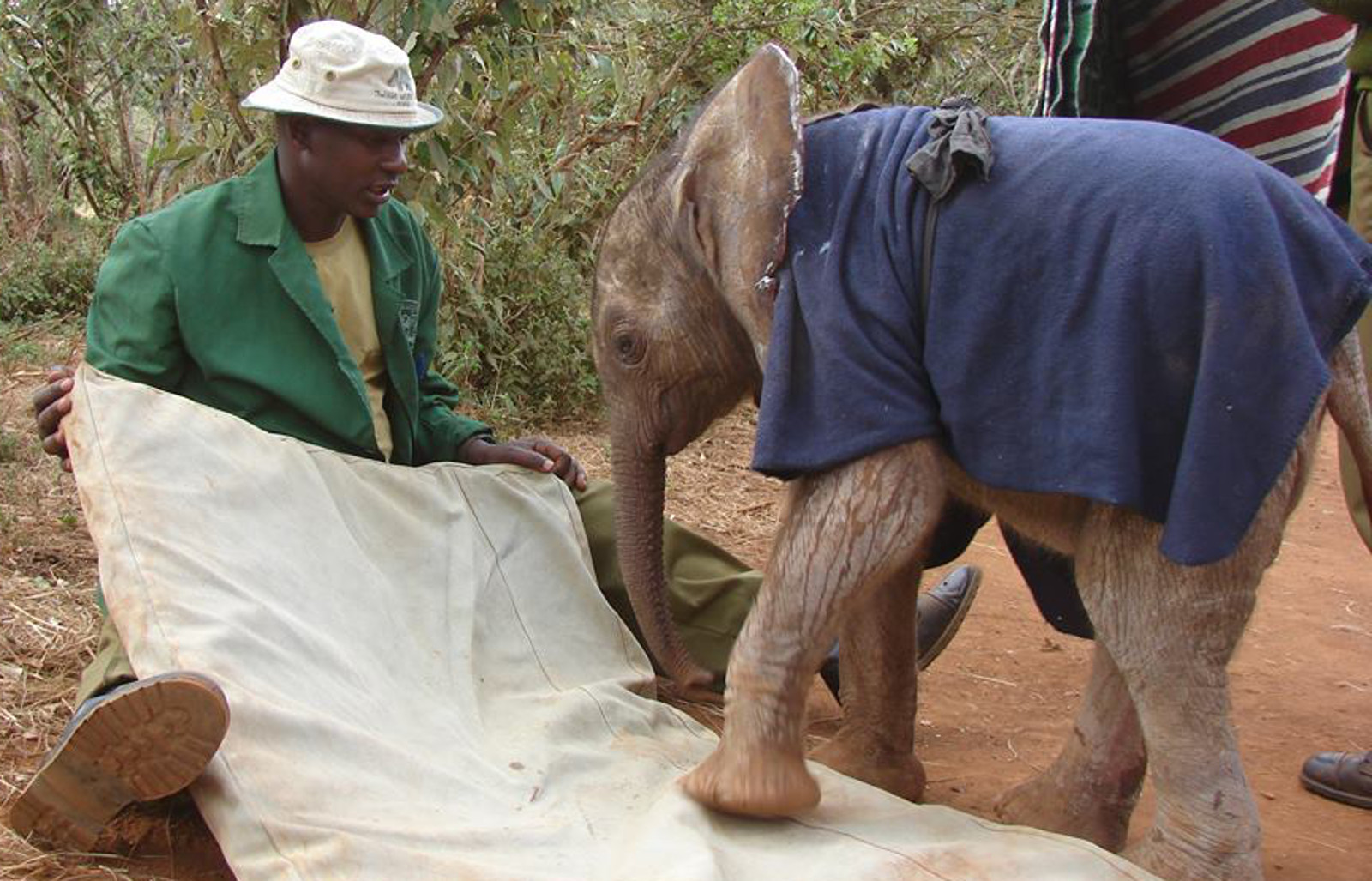 Meet the Elephant Whisperer Who Has Cared for 180 Orphaned Elephants in the Past 26 Years