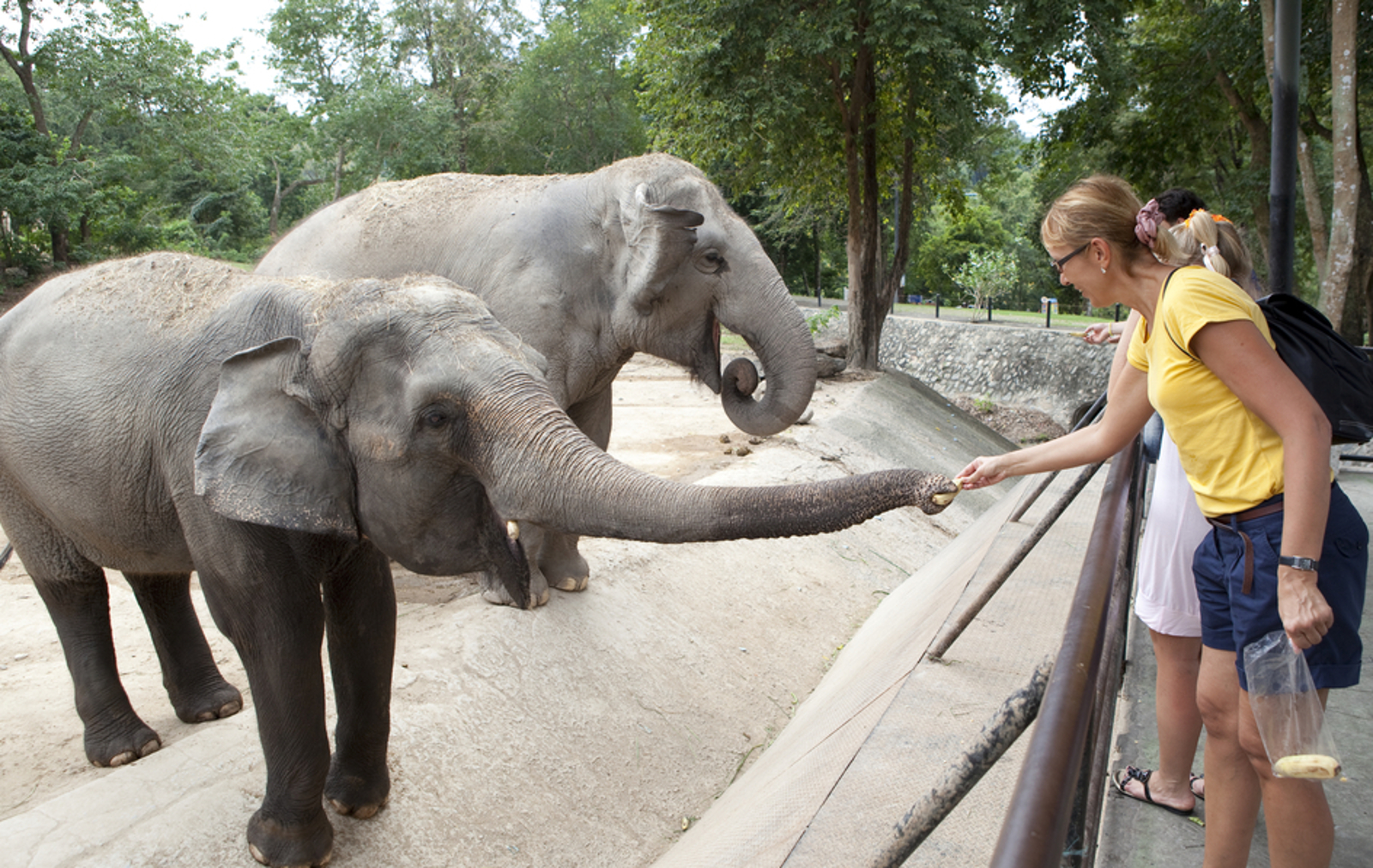 How Zoos Create a False Sense of Entitlement When it Comes to Interacting With Animals