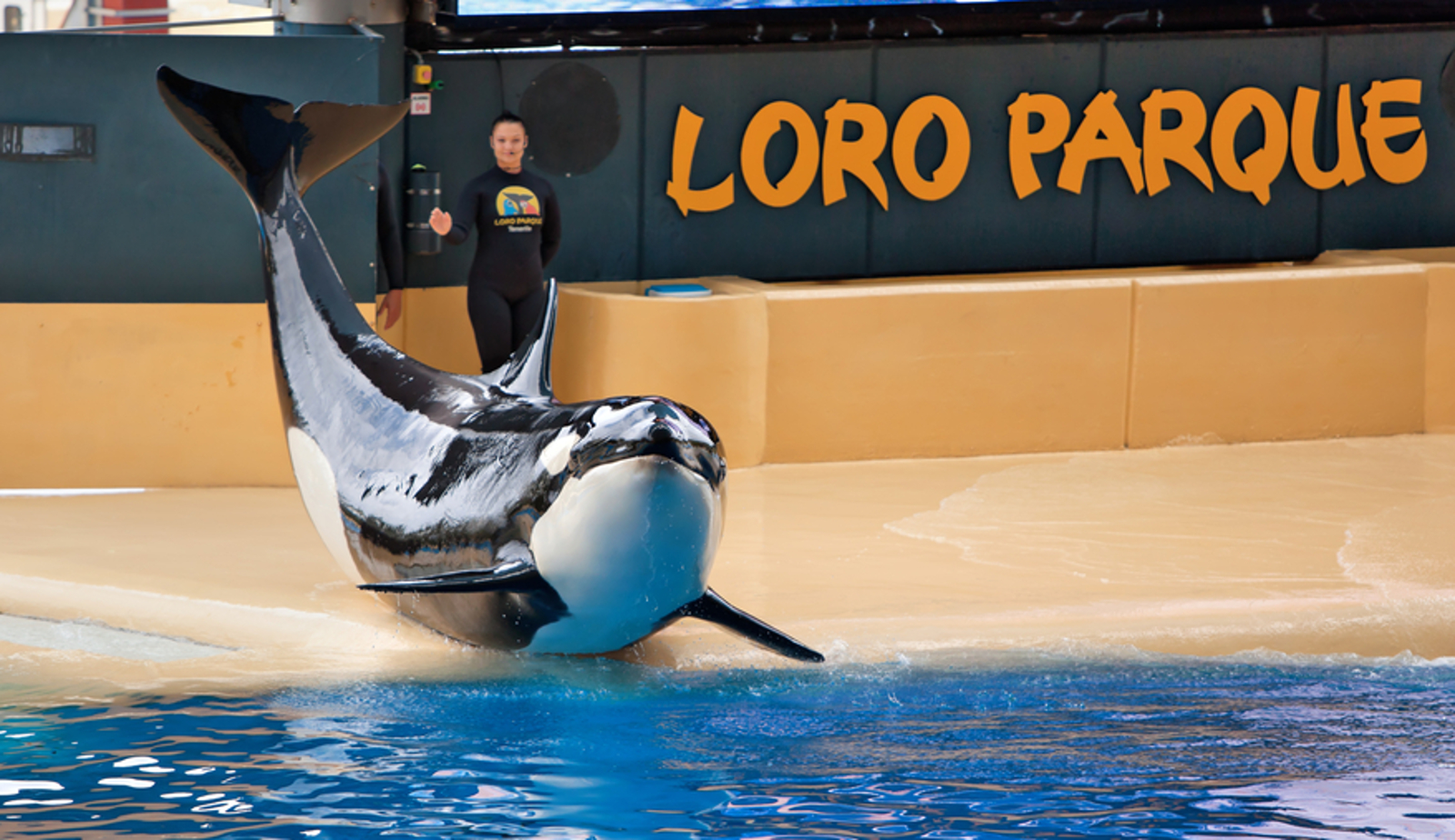 Fractured Teeth and Broken Minds – Assessing Captive Orca Welfare