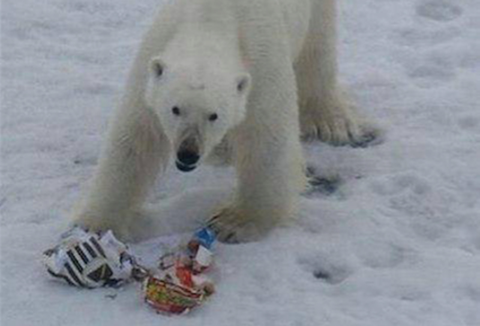Arctic Ice is Rapidly Melting and Being Replaced by Plastic … Here's How You Can Help Today!