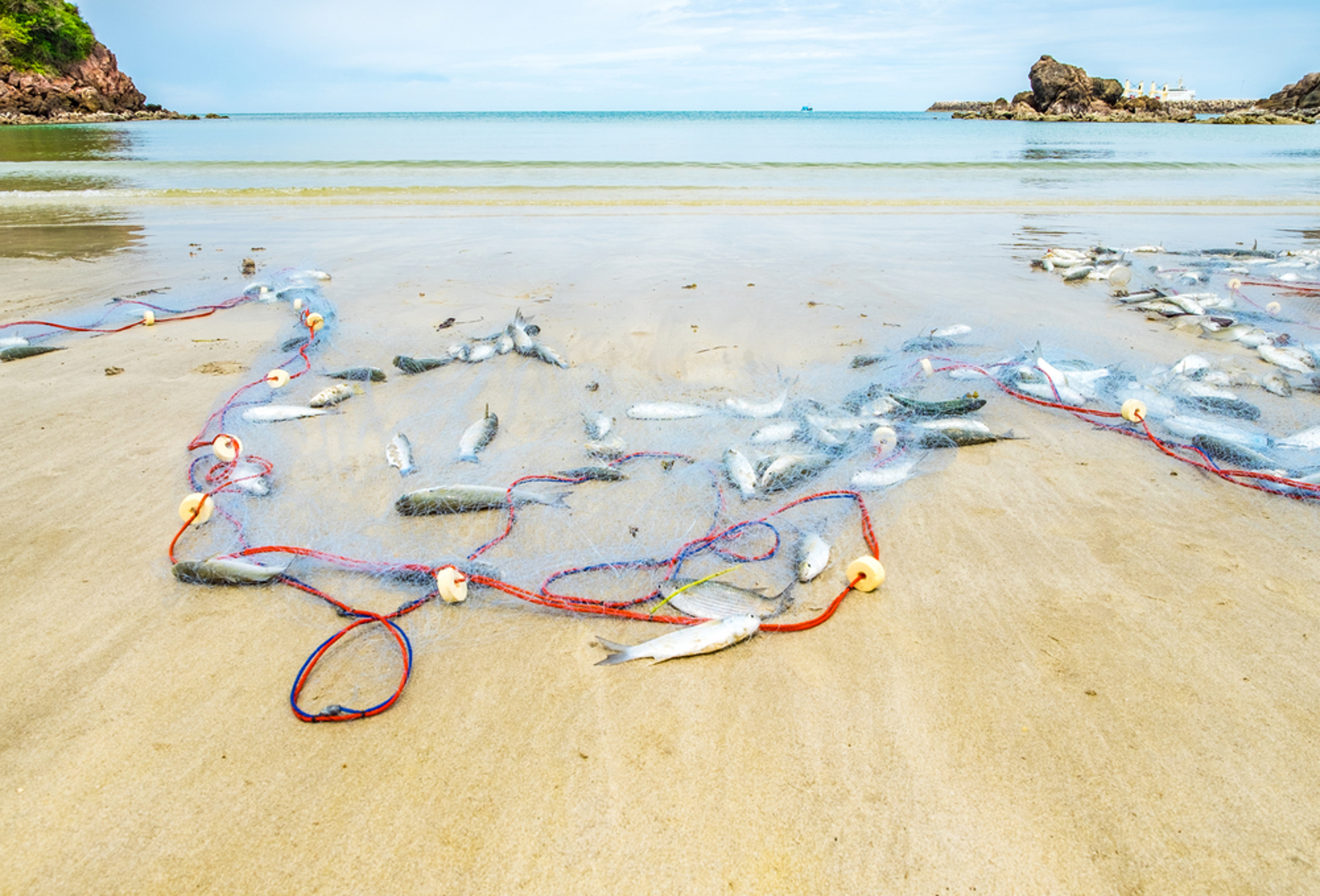 Ghost Fishing Gear Is Devastating Marine Life: How We're Working to End This