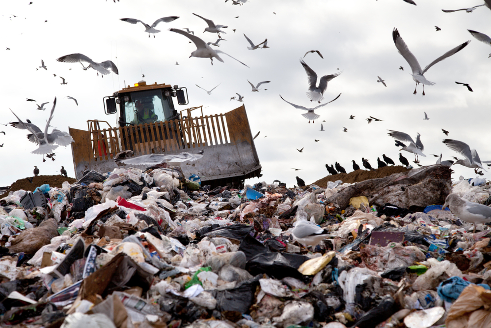 Landfills and their Effects on Wildlife