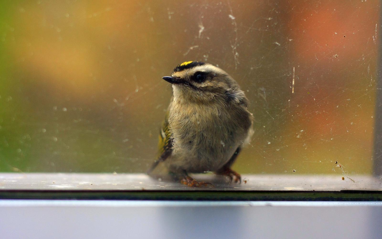 How To Bird-Proof Your Windows