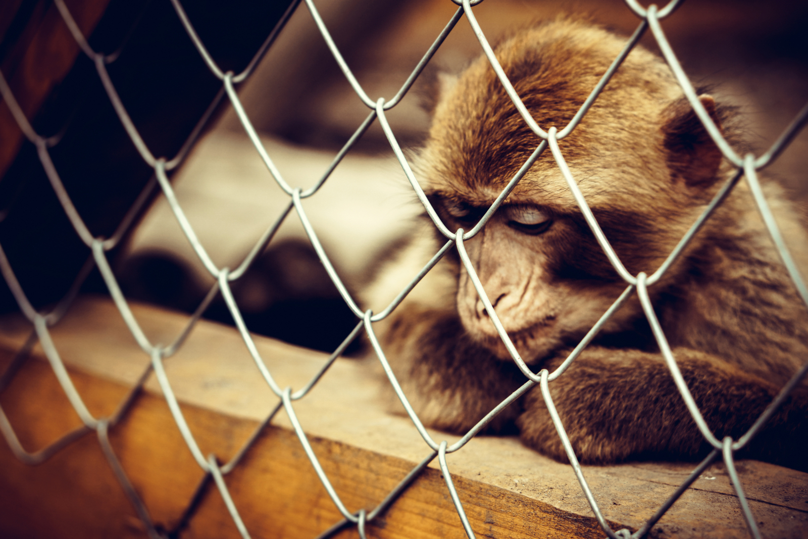 Why it's a Problem if Animals Go Extinct in the Wild, but Continue to Exist in Zoos