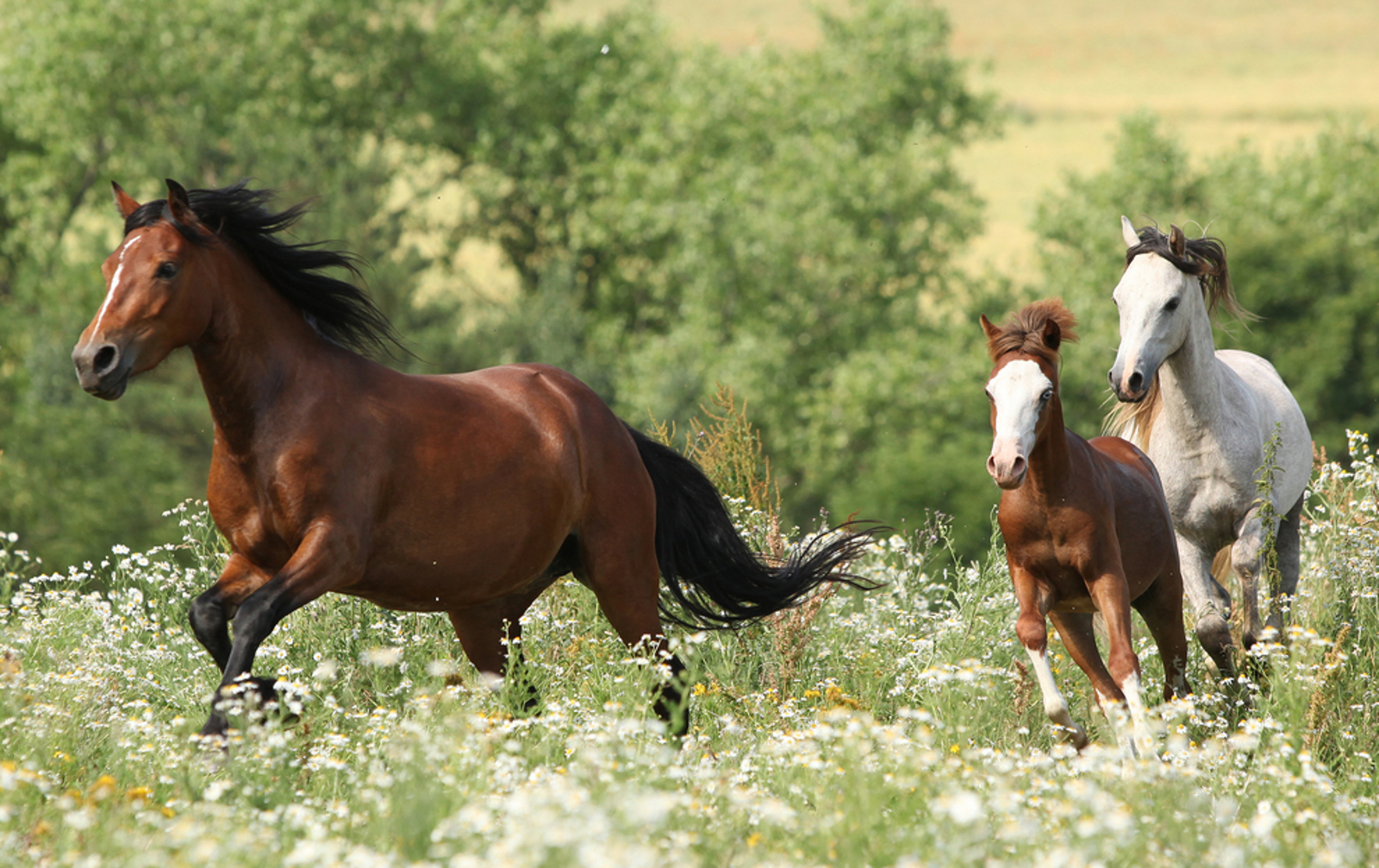 Urgent Action Needed Now to Stop Horrific Sterilization of Wild Horses
