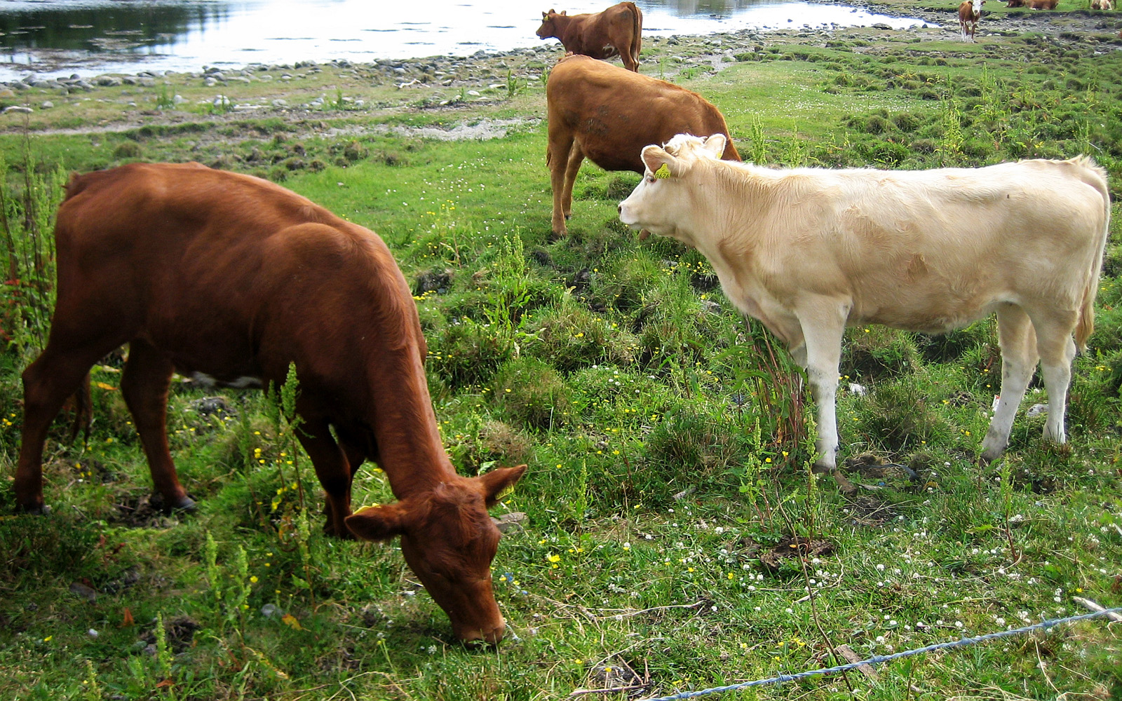 Livestock VS Wildlife The Impact of Cattle Grazing and Animal Agriculture