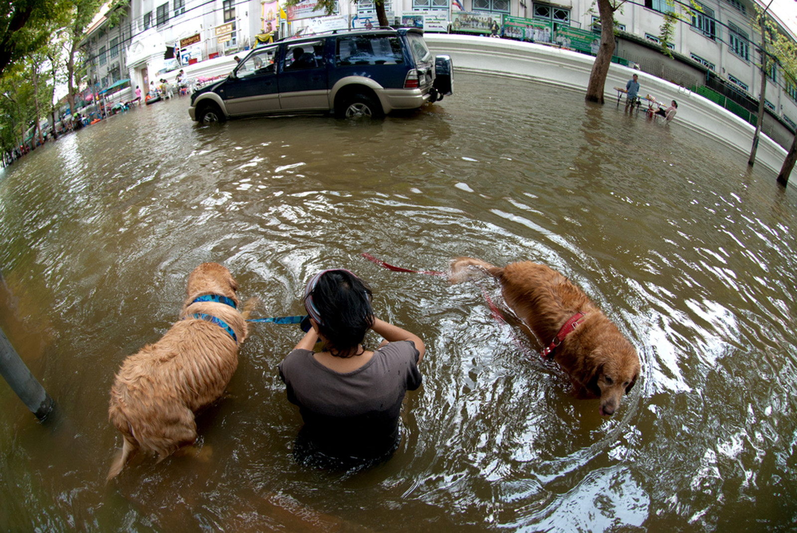 5 Tips That Could Save Your Pet in Case of a Natural Disaster